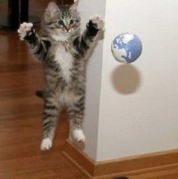 аватарка для контакта котенок играет