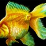 граффити на стену бесплатно золотая рыбка