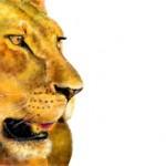 рисунок львица