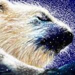 граффити на стену белый медведь