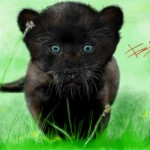 граффити в контакте маленькая пантера