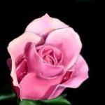 граффити в контакте красивая роза
