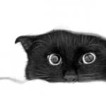 граффити на стену черная кошка