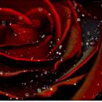 граффити на стену красивая роза