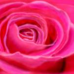 граффити на стену розовая роза