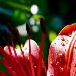 рисунок очень красивый цветок