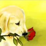 граффити в контакте щенок и роза