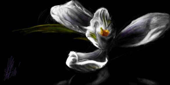 Цвет помады ив роше