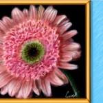 рисунок вконтакте красивый цветок в рамке