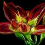 рисунок цветок бесплатно
