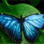 рисунок в контакте красивая бабочка