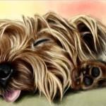 рисунок в контакте красивая спящая собачка