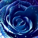 граффити в контакте синяя роза