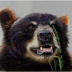 граффити в контакте медведь