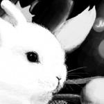 граффити в контакте кролик