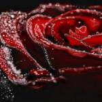 граффити на стену в контакте красивая роза
