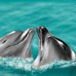 граффити для контакта дельфины
