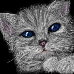 граффити в контакте кот