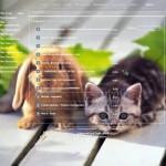 тема для контакта кролик и котенок