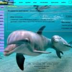 тема для контакта дельфины